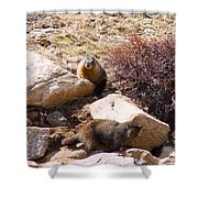 Marmots On Mount Evans Shower Curtain