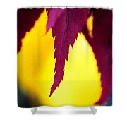 Maroon And Yellow Shower Curtain