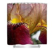 Maroon Iris Shower Curtain