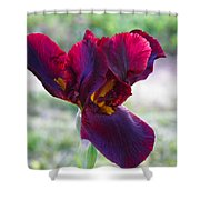 Maroon Iris Shower Curtain
