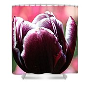 Maroon Standout Shower Curtain