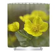 Marsh Marigolds Shower Curtain