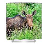 Marsh Moose Shower Curtain