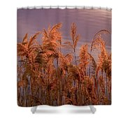 Marsh Reeds Aglow  -  150218a-162 Shower Curtain