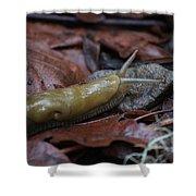 Marsh Slug Shower Curtain