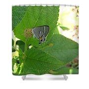 Martial Scrub Hairstreak Butterfly Shower Curtain