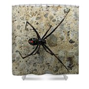 Maryland Black Widow Shower Curtain