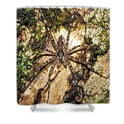 Brown Fishing Spider Shower Curtain