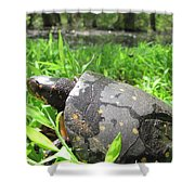 Maryland Spotted Turtle Shower Curtain