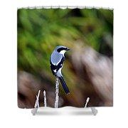 Masked Bird Shower Curtain