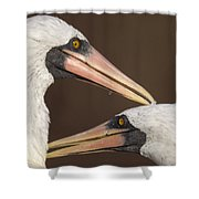 Masked Booby Couple Allopreening Shower Curtain