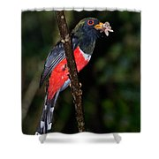 Masked Trogon With Moth Shower Curtain