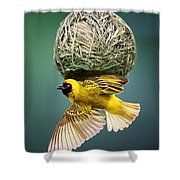 Masked Weaver At Nest Shower Curtain by Johan Swanepoel