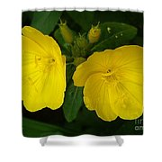 Matching Pair Shower Curtain