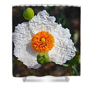 Matilija Poppy Buds And Bloom Shower Curtain