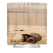 Mating Hookers Sealions Taking A Nap On Beach Shower Curtain