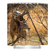 Mating Mulies Shower Curtain