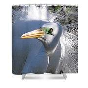 Mating Plumage Shower Curtain