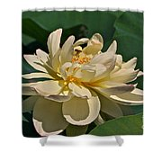 Mature Lotus Flower And Cute Hovering Honeybee Shower Curtain