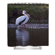 Mature Pelican   #9337 Shower Curtain