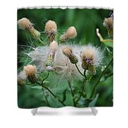 Maturing Weed Shower Curtain