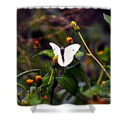 Maui Butterfly Shower Curtain