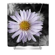 Mauve Beauty W-black And White Shower Curtain