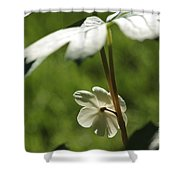 May Apple Flower Shower Curtain