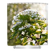 May Pear Blossoms Shower Curtain