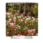 May Tulips Shower Curtain