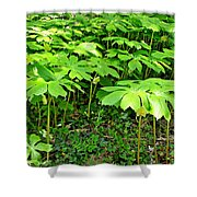 Mayapple Plants Shower Curtain