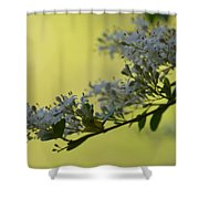 May's Soft Whispers Shower Curtain