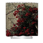 Mdina Shower Curtain