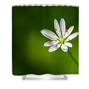 Meadow Candy - Featured 3 Shower Curtain