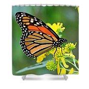 Meadow Monarch Shower Curtain