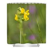 Meadow Vetchling Shower Curtain