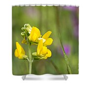Meadow Vetchling Wild Flower Shower Curtain