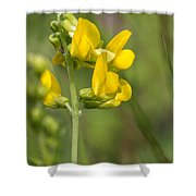 Meadow Vetchling Yellow Flower Shower Curtain