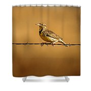 Meadowlark And Barbed Wire Shower Curtain