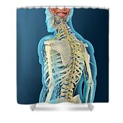 Medical Illustration Of Human Brain Shower Curtain