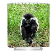 Meditating Monkey Shower Curtain