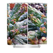 Medusa Succulent In Stereo Shower Curtain