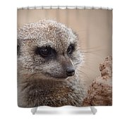 Meerkat 7 Shower Curtain by Ernie Echols