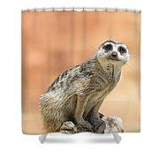 Meerkat Manor V3 Shower Curtain by Douglas Barnard