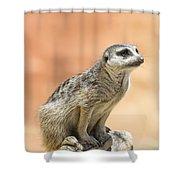 Meerkat Manor V4 Shower Curtain