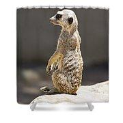 Meerkat Manor V5 Shower Curtain