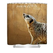 Meerkat Praise Shower Curtain by Methune Hively