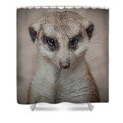 Meerkat Stare-down Shower Curtain