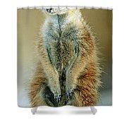 Meerkat Suricata Suricatta Shower Curtain