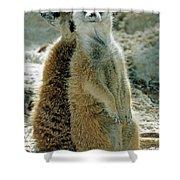 Meerkats Suricata Suricatta Shower Curtain